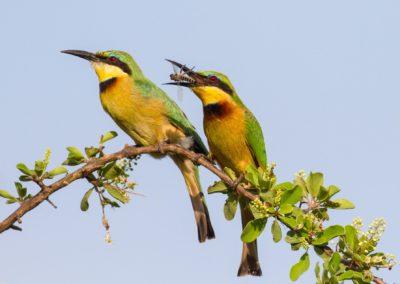 Birds-17