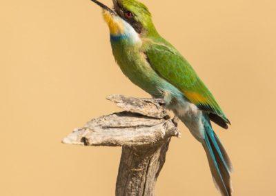 Birds-24
